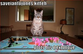 saveiantojones kitteh......  .................................plots his next move