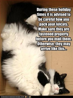 During these holiday times it is advised to be careful how you pack your lolcats. Make sure they are fastened properly before you mail them. Otherwise, they may arrive like this...