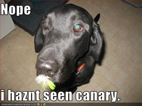 Nope  i haznt seen canary.