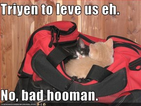 Triyen to leve us eh.  No, bad hooman.