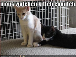 mous watchen kitteh comiteh.