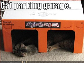 Cat parking garage.