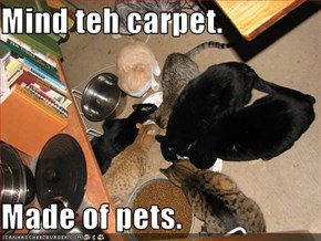 Mind teh carpet.  Made of pets.