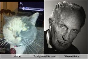 this cat Totally Looks Like Vincent Price