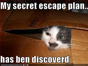 My secret escape plan...  has ben discoverd