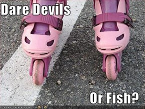 Dare Devils  Or Fish?