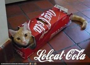 Lolcat-Cola