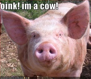 oink! im a cow!