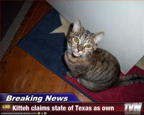 Breaking News - Kitteh claims state of Texas as own