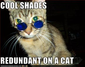 COOL SHADES  REDUNDANT ON A CAT