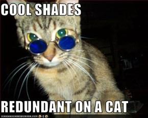 COOL SHADES  REDUNDANT ON A CAT