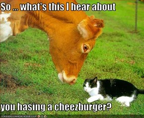 So ... what's this I hear about  you hasing a cheezburger?