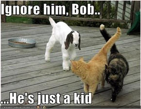 Ignore him, Bob..  ...He's just a kid