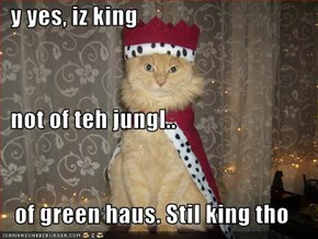 y yes, iz king   not of teh jungl.. of green haus. Stil king tho