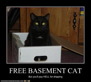 FREE BASEMENT CAT