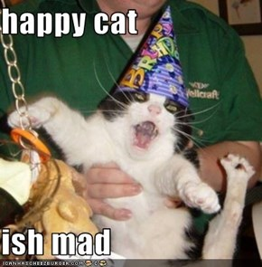 happy cat   ish mad
