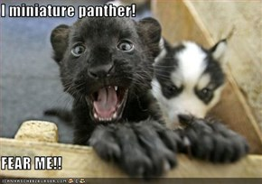I miniature panther!  FEAR ME!!