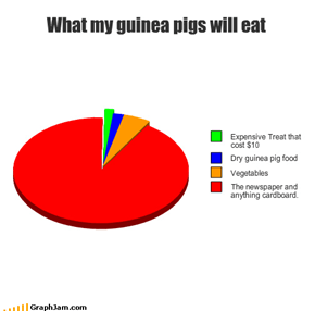 What my guinea pigs will eat