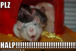 PLZ  HALP!!!!!!!!!!!!!!!!!!!!!!!!!!!!!!!!!!!!!!!!!!!!!!!!!