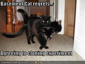 Basement Cat regrets...  Agreeing to cloning experiment