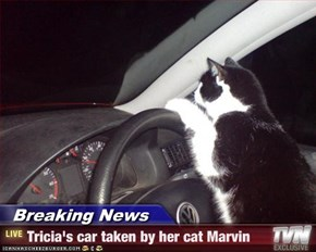 Breaking News - Tricia's car taken by her cat Marvin