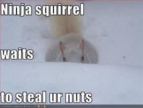 Ninja squirrel waits to steal ur nuts