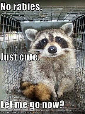 No rabies. Just cute. Let me go now?
