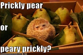 Prickly pear or peary prickly?