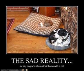 THE SAD REALITY...