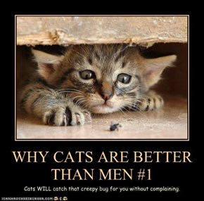 WHY CATS ARE BETTER THAN MEN #1