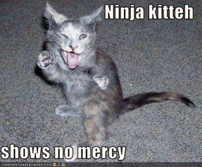 Ninja kitteh  shows no mercy