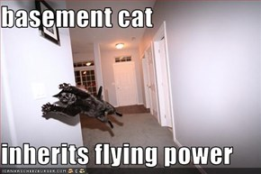 basement cat  inherits flying power