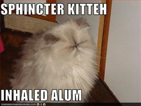 SPHINCTER KITTEH  INHALED ALUM