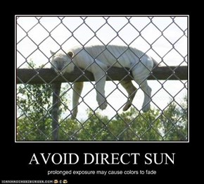 AVOID DIRECT SUN