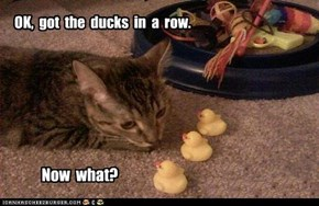OK,  got  the  ducks  in  a  row.