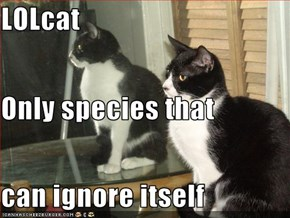 LOLcat Only species that can ignore itself