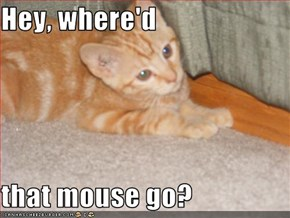 Hey, where'd   that mouse go?