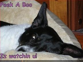 Peek A Boo   Iz watchin u!