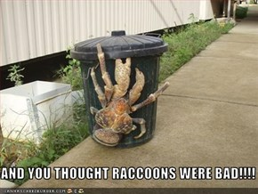 AND YOU THOUGHT RACCOONS WERE BAD!!!!