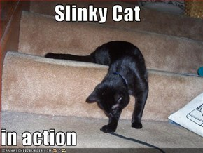Slinky Cat  in action
