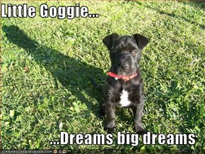 Little Goggie...  ...Dreams big dreams