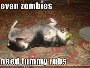evan zombies  need tummy rubs