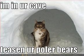 im in ur cave  teasen ur poler bears