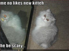 me no likes new kitteh...  he be scary...