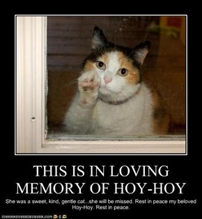 THIS IS IN LOVING MEMORY OF HOY-HOY