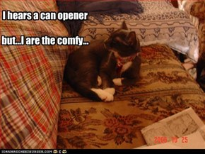 I hears a can opener  but...I are the comfy...
