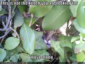 This is not the kitteh you are looking for  move along