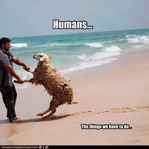 Humans...