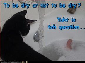 Hamlet Kitteh's Dilemma