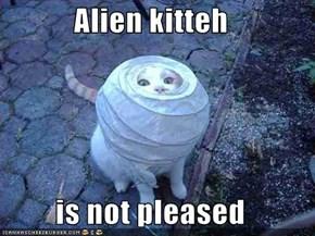 Alien kitteh  is not pleased